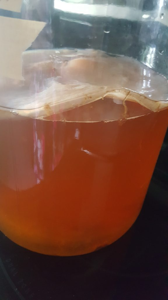 Mature scoby